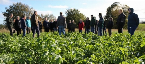 Heritage grains and crop innovation for crofters