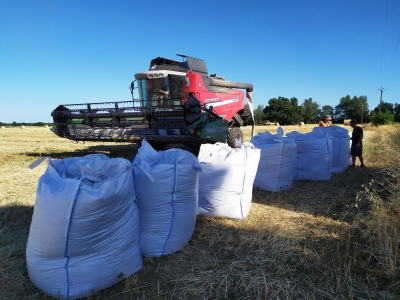 Intercropping harvesting INRA AGCO