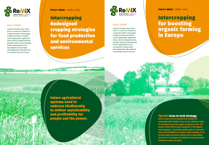 Policy Briefs Intercropping New