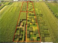 china intercropping 5 several crops