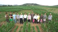 china intercropping 6 team