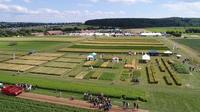 EFD Intercropping Germany