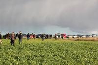 intercropping wp1 1