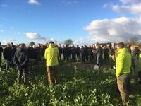 intercropping wp1 2