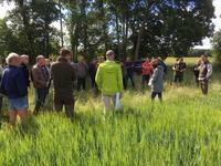 intercropping wp1 3